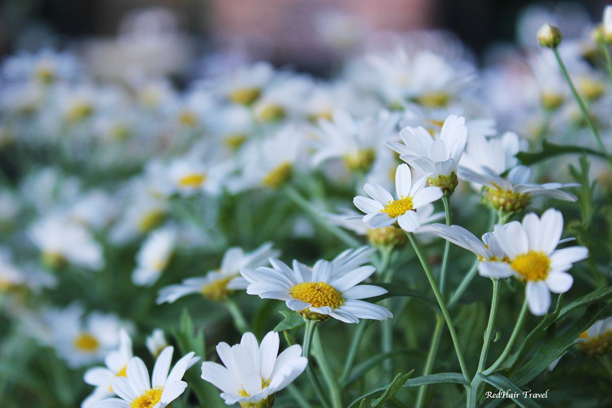 oslo flowers