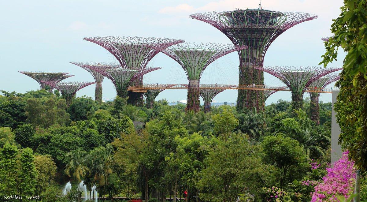Супердеревья, Сады у Залива, Сингапур