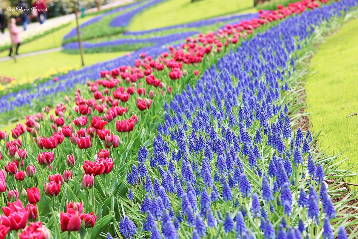 цветы парк Кекенхоф