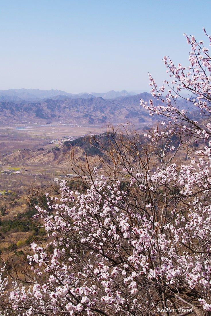Великая Китайская стена во время цветения