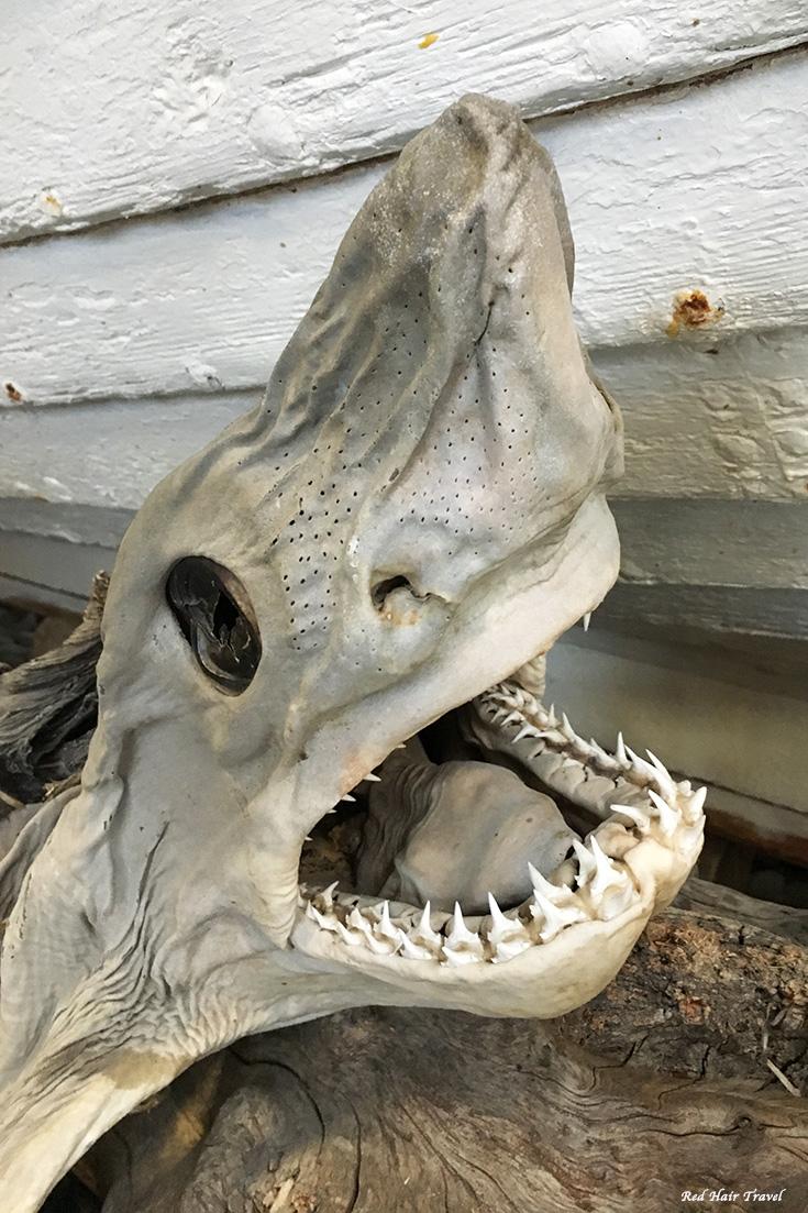 музей акулы, Исландия, Хаукарль, национальное блюдо