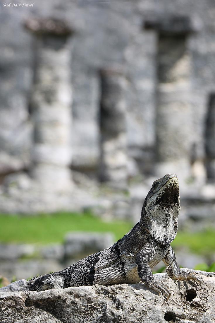 Руины Майя,Мексика
