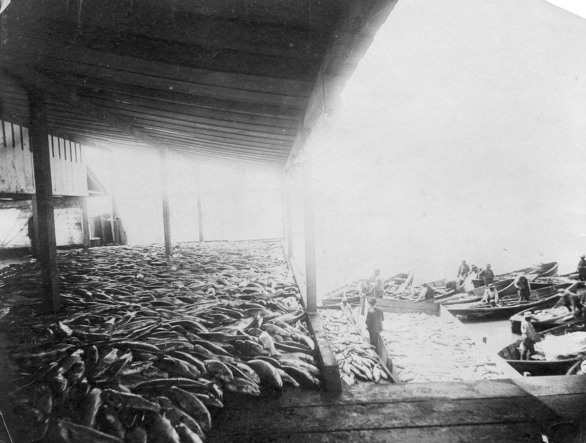Phoenix Cannery - первый консервный завод Стивстона, Steveston History