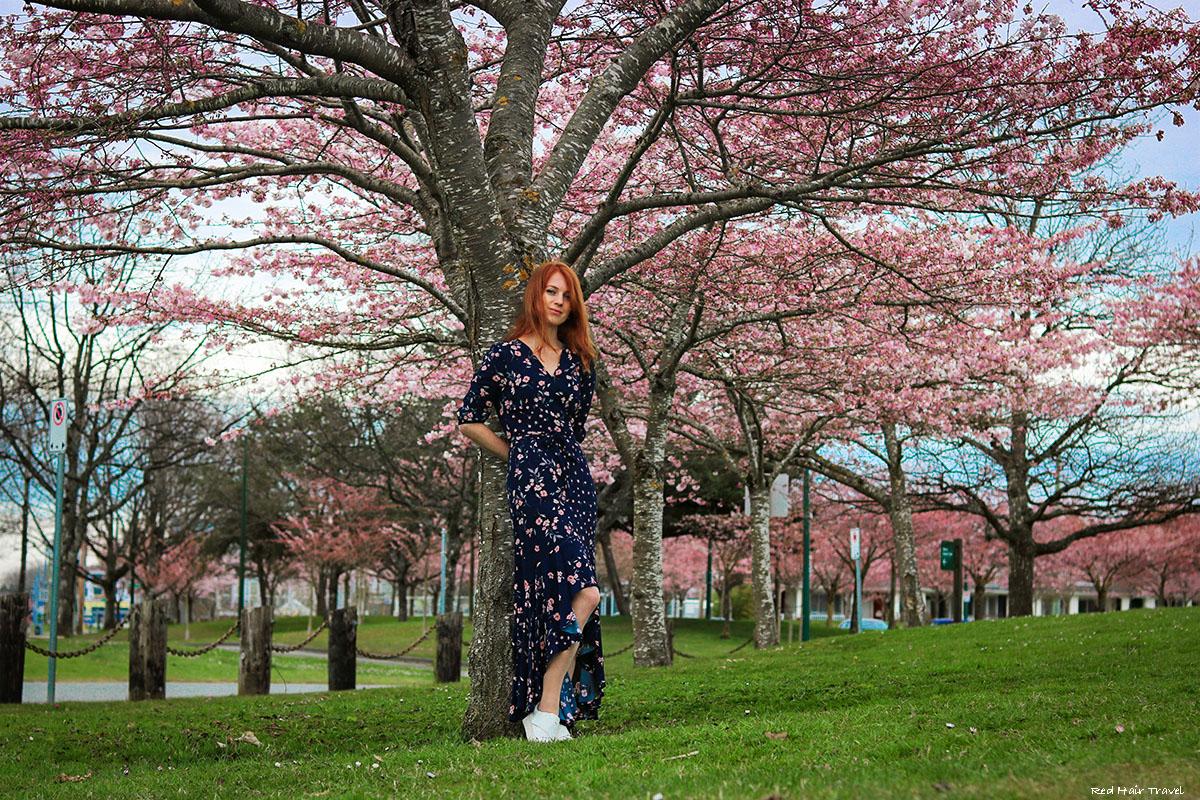 Garry Point sakura trees
