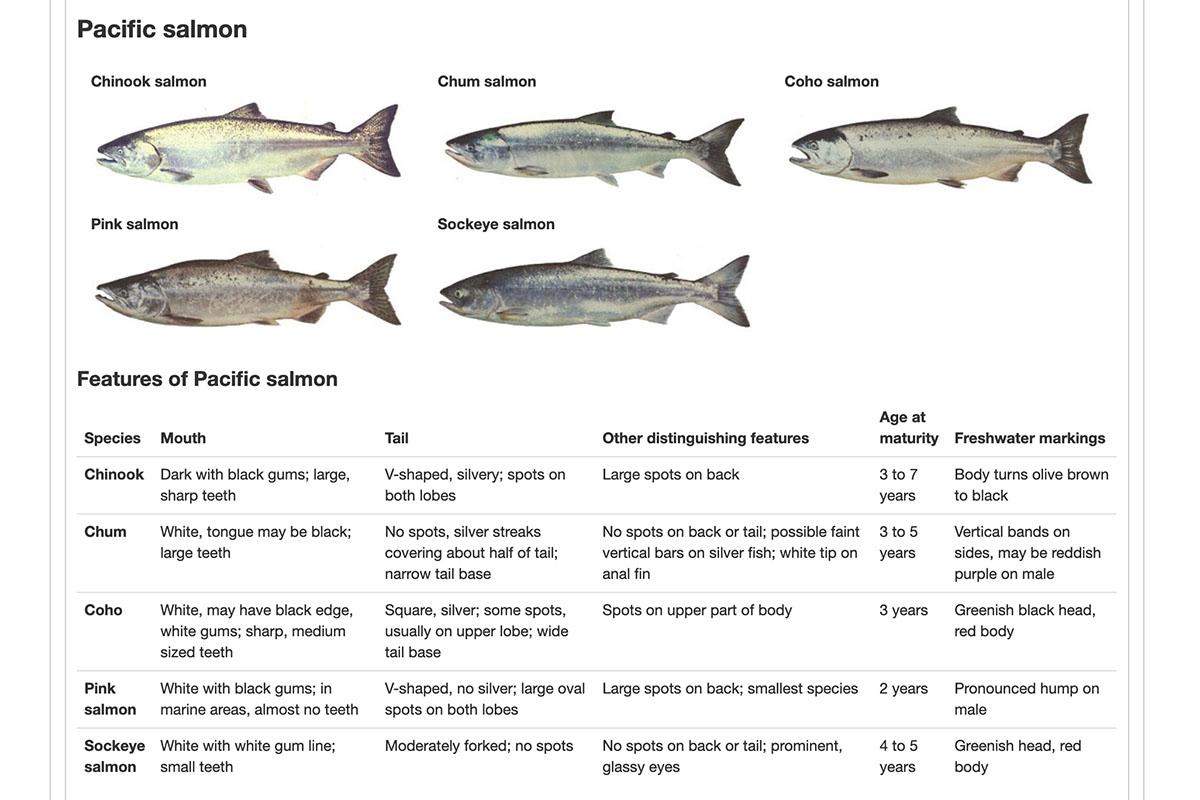 тихоокеанский лосось, виды