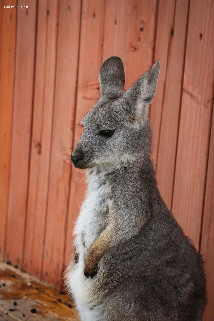 kangaroo farm kelowna