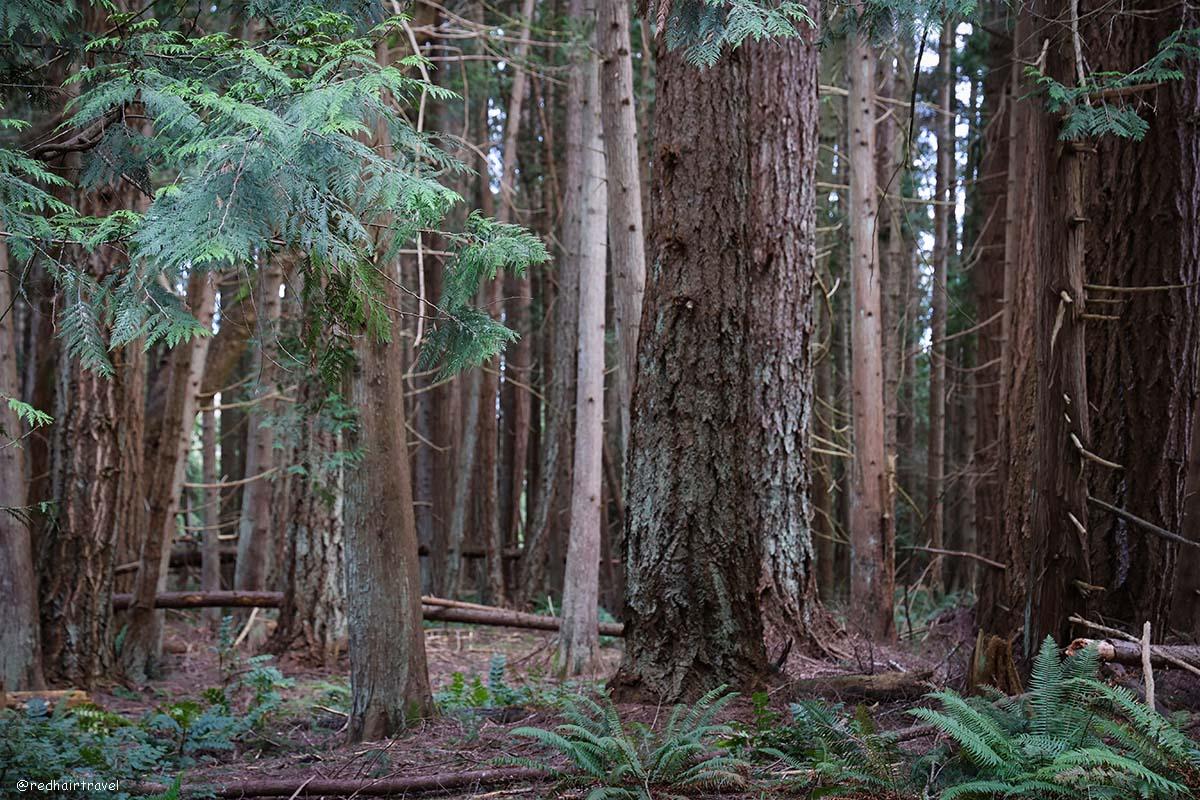 Elder Cedar Nature Reserve, Gabriola