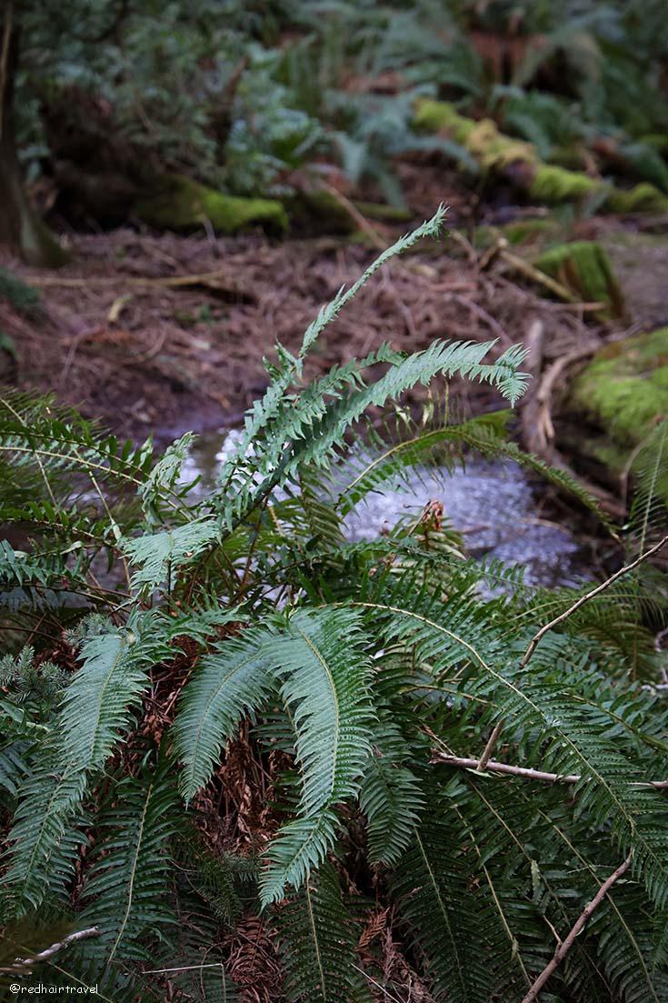 Elder Cedar Nature Reserve