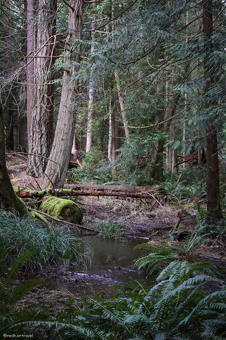 Elder Cedar Nature Reserve, Gabriola Island