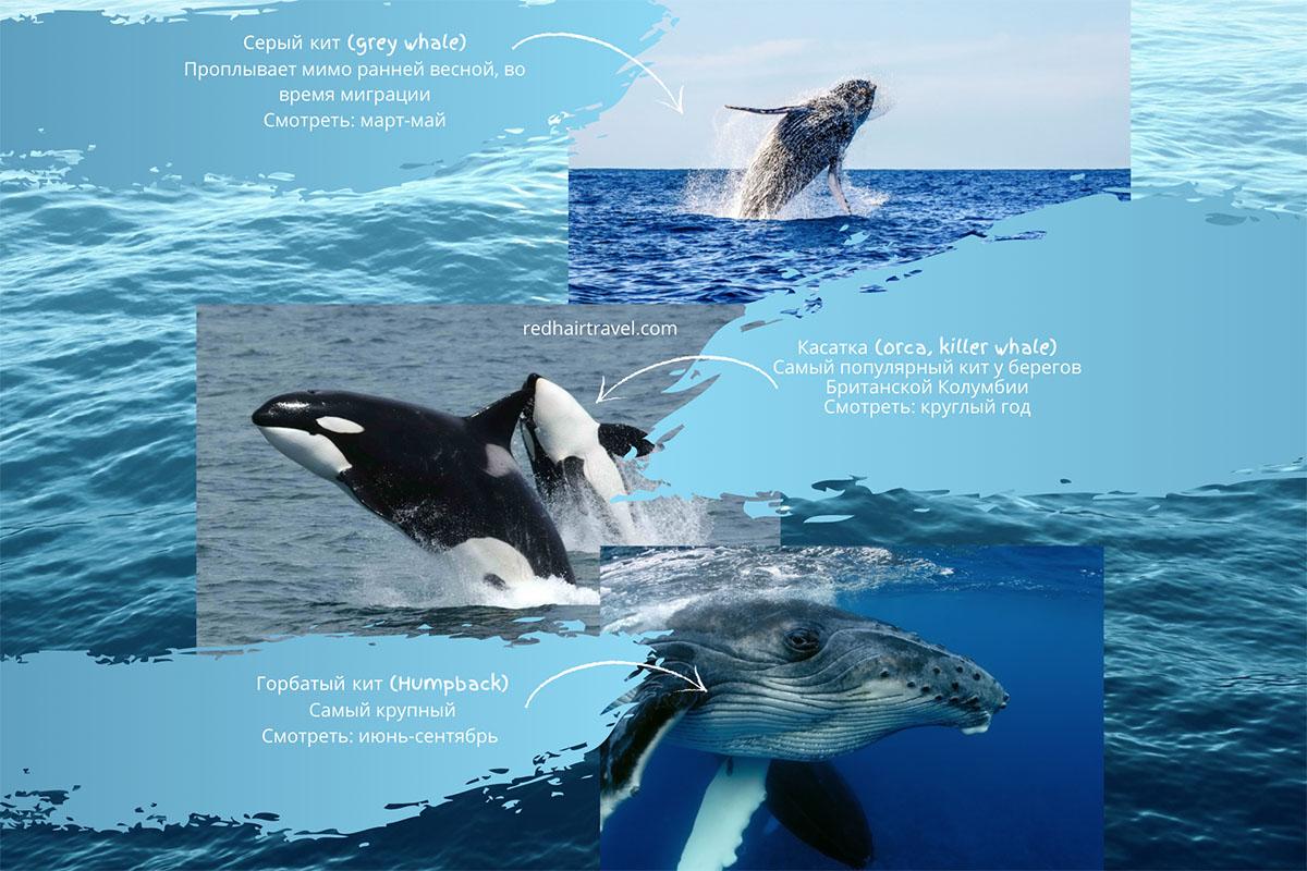 Ванкувер, экскурсии на китов