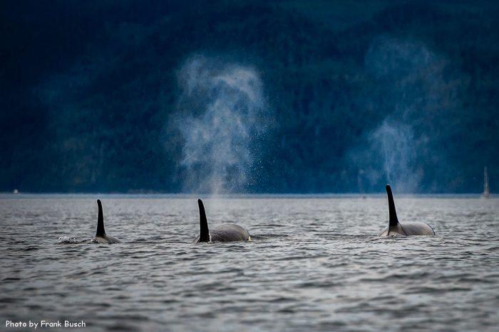Ванкувер и Остров Ванкувер за 2 недели (маршрут), туры на китов