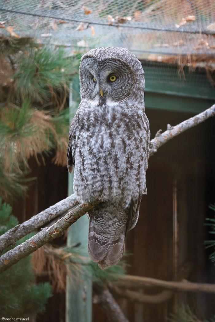 B.C. Wildlife Kamloops